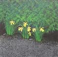 Daffs<br>Acrylic on Canvas, Paintings