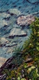 Rocks Under Water: Precipice - Crystal Bay<br>Oil & Acrylic on Canvas, Paintings