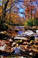 Smoky Mountain Stream, Tennessee<br>Photographic Print on Metallic Paper & Duraplaq, Photography