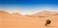 Sand Storm in the Sahara<br>Photographic Print on Dibond, Photography