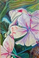 Hydrangeas At Dusk<br>Colored Pencil on Paper, Drawings