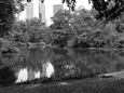 Central Park Pond<br>Platinum/Palladium Photograph, Photography