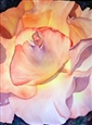 Everything's Rosey<br>Watercolor on Paper, Paintings