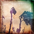 Dried Flowers<br>Digital Print on Fine Art Paper, Photography