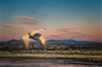 Sandhill Crane in a New Mexico Landscape<br>Photograph on Fine Art Paper, Photography