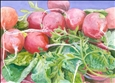 Radishes<br>Giclee Print, Prints