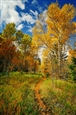 Aspens Pathway Gallery<br>Photographic Print on Metallic Paper & Duraplaq, Photography